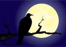 Krähe auf dem Mondschein lizenzfreie abbildung