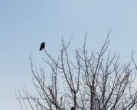 Krähe auf einem Baum im Winter Lizenzfreie Stockbilder