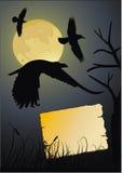 Krähe in der dunklen Nacht Lizenzfreies Stockbild