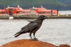 Krähe, die auf einem Pier in Alaska sitzt lizenzfreie stockfotografie