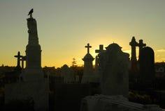 Krähe am Friedhof Stockfotografie