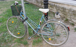 Krähe gehockt auf Fahrradvogel Lizenzfreie Stockfotografie
