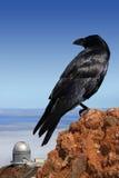 Krähe oben auf die Welt Stockfotos