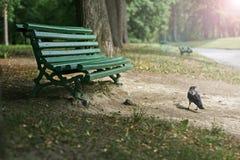 Krähe am Weg im Park Lizenzfreie Stockbilder