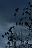 krähen lizenzfreie stockfotografie