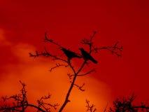 Krähen in den Bäumen Stockbild