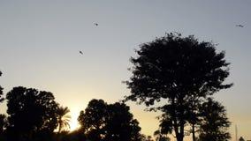 Krähen, die weg fliegen stock footage