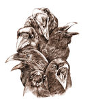 Krähen und Raben Stockfotos