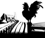 Krähende Bauernhofillustration des jungen Hahns Stockbild