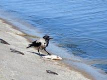 Krähenvogel auf Seeküste Lizenzfreie Stockbilder