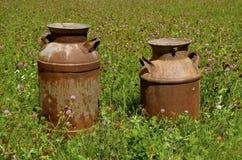 Kräm- cans i en växt av släktet Trifoliumlapp royaltyfria foton