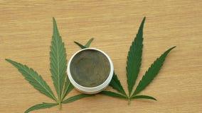 Kräm- medicinsk cannabishampa och bladcannabidiolen CBD skördade torkat av frö som var kvalitets- för produktion av salvor stock video