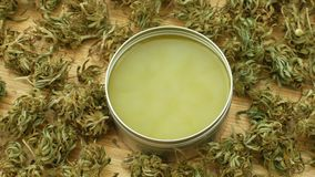 Kräm- medicinsk cannabishampa och cannabidiolen CBD skördade torkat av frö som var kvalitets- för produktion av salvor, avlöser stock video