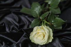 Kräm steg på svart sammet Royaltyfria Bilder