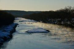 Kräne in einem Winter-Fluss lizenzfreies stockfoto