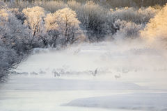Kräne im Nebel: Crane Dance im Fluss Lizenzfreie Stockfotografie