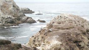 Kräne und Seemöwen auf Felsen in Kalifornien Stockbild