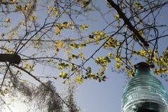 Kräppmyrten och sol- lykta Arkivfoto