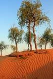 Kräuselungen des Sandes Stockfoto