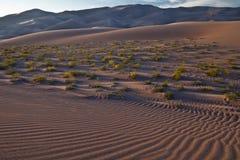 Kräuselungen im Sand - großer Sanddüne-Nationalpark Stockbild