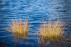 Kräuselungen im Wasser Ansicht von Sumpfsee mit Grasbüschen Alte Backsteinmauer Abschluss oben Lizenzfreie Stockfotos