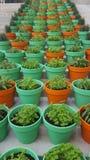 Kräuter in den Blumentöpfen Stockfotos