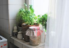 Kräuter in der Küche lizenzfreies stockfoto