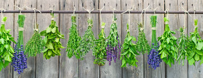Kräuter, die an der Gartenwand hängen Stockfoto