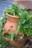 Kräuter im Pflanzer Lizenzfreies Stockfoto