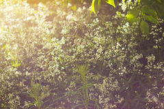 Kräuter im Sonnenlicht Stockfotos
