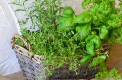 Kräuter im Weidenhandbasket auf weißem rustikalem Hintergrund Lizenzfreie Stockfotografie