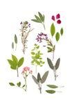 Kräuter und Blumen des Sommers Lizenzfreies Stockfoto
