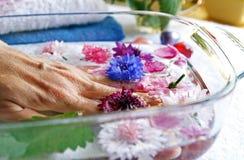 Kräuter und Blumen für Frauenhandsorgfalt Stockbild