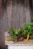 Kräuter und Gemüse Stockbilder