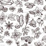 Kräuter und Gewürz-Skizzen-Muster Lizenzfreie Stockfotos
