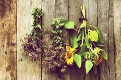 Kräuter und Sonnenblumen, die auf einer Stallwand trocknen. stockbild