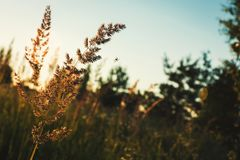 Kräuter und Spinne bei Sonnenuntergang Lizenzfreies Stockbild