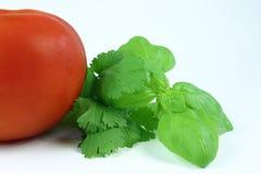 Kräuter und Tomate lizenzfreie stockfotografie