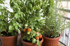 Kräutergarten eingemacht auf Terrasse Lizenzfreie Stockbilder