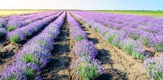 Kräuterlandschaft der aromatischen Anlage lizenzfreie stockbilder