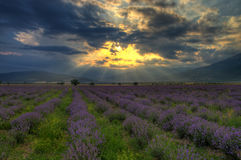 Kräuterlandschaft der aromatischen Anlage Lizenzfreie Stockfotografie