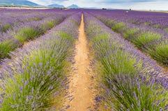 Kräuterlandschaft der aromatischen Anlage Lizenzfreies Stockfoto