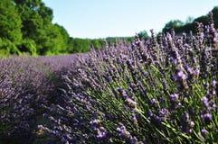 Kräuterlandschaft der aromatischen Anlage Lizenzfreie Stockfotos