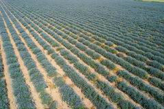 Kräuterlandschaft der aromatischen Anlage stockfoto