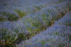 Kräuterlandschaft der aromatischen Anlage stockfotografie