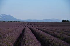 Kräuterlandschaft der aromatischen Anlage lizenzfreies stockbild