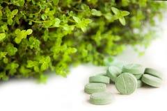 Kräutermedizinpillen mit Grünpflanze Stockbild