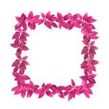 Kr?uterrahmen des rosa Aquarellquadrats stockfotos