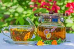 Kräutertee in der Teekanne und in der Schale Stockfoto
