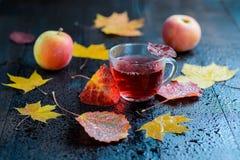 Kräutertee des heißen Herbstvitamins in der transparenten Schale mit Wasserdampf mit Herbstlaub und Äpfeln Stockfotos